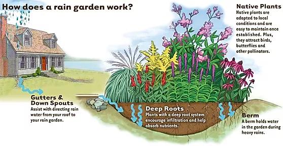 A diagram of a rain garden