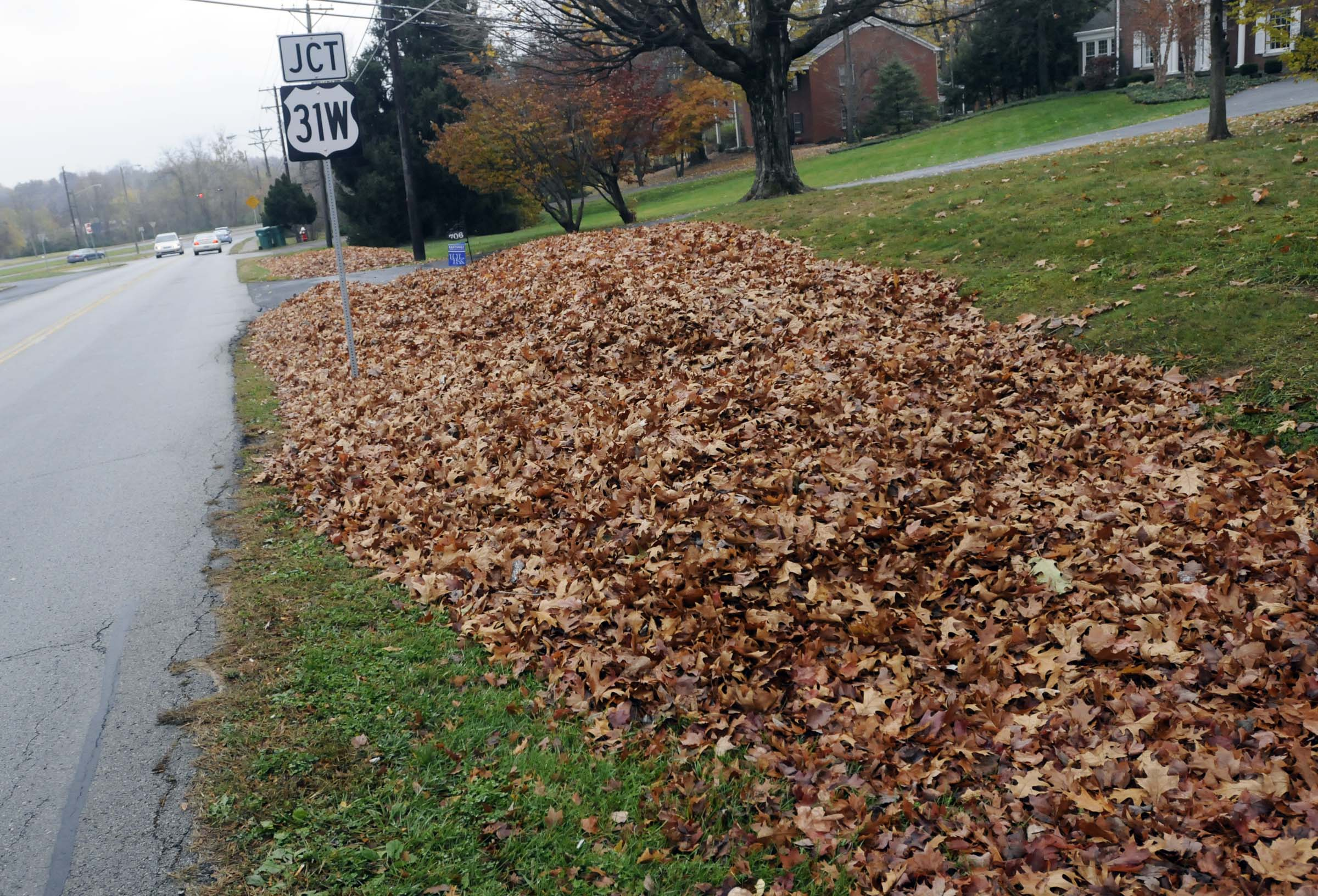 Fall leaves filling a road side ditch