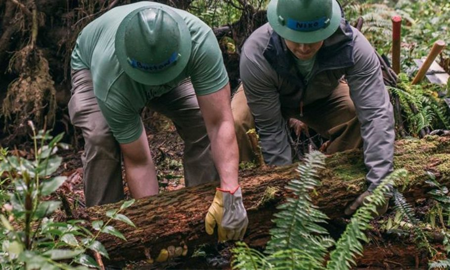 Privately Owned Forests: An Important Resource for the Future