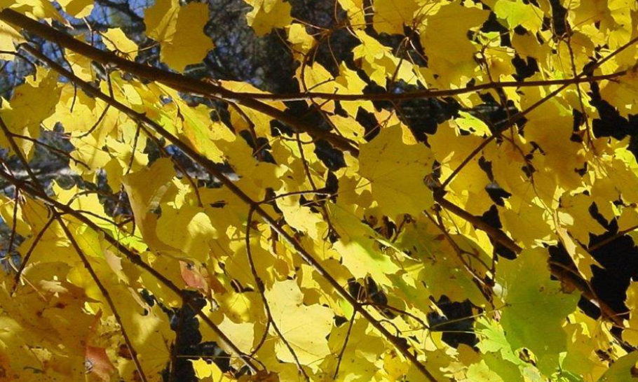 Autumn Gold – Reap the Benefits of Fallen Leaves