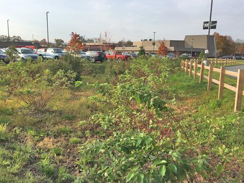 A BMP Bus Tour photo of a rain garden at Delaware Velley High School.
