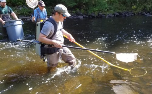 Electrofishing in progress