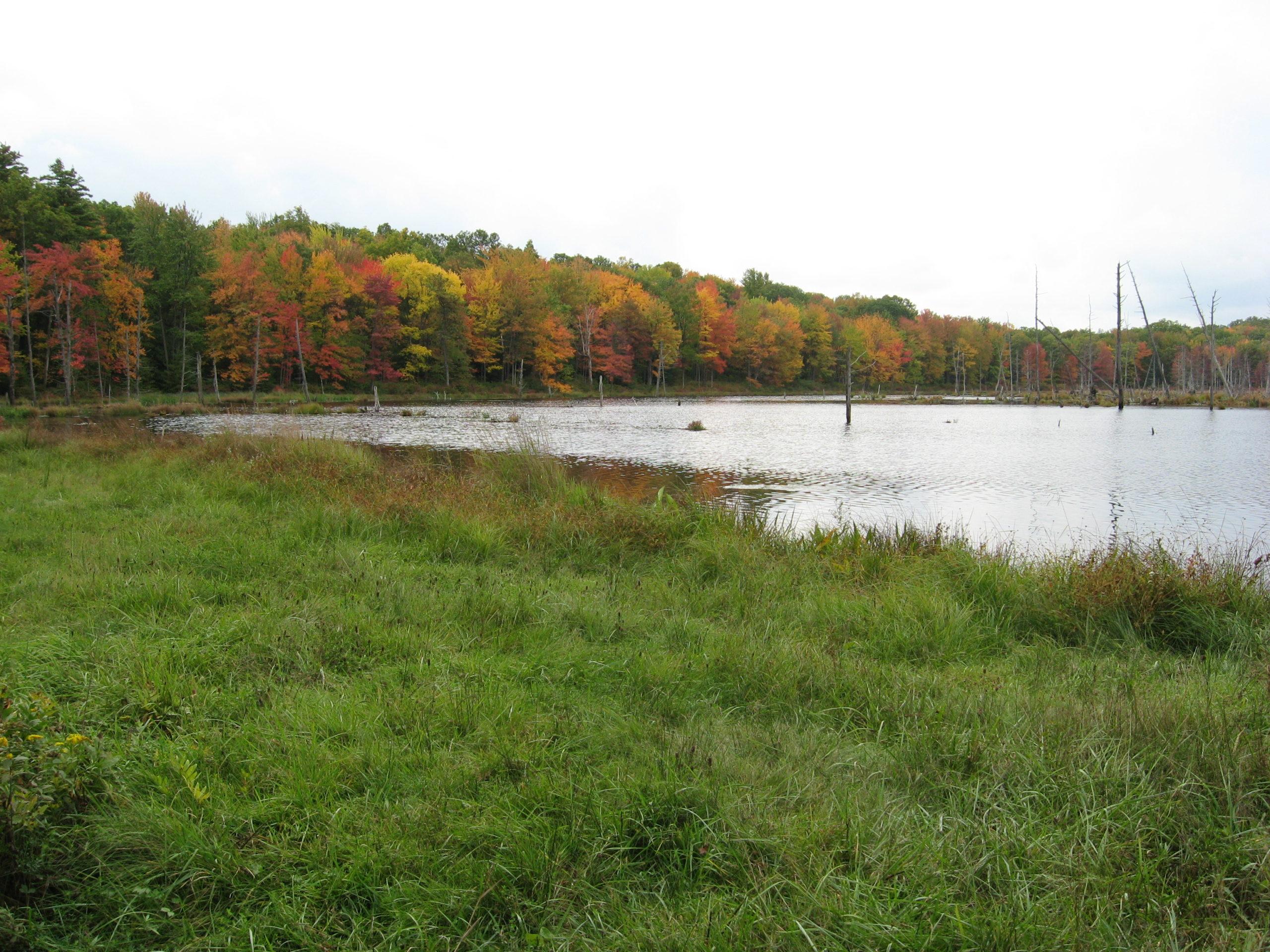Local lake shore in fall