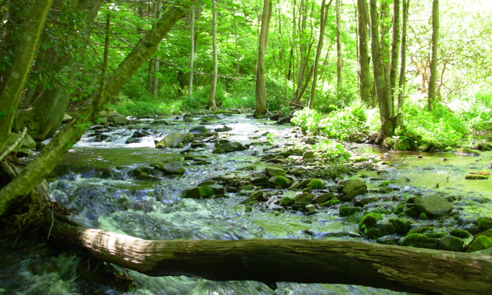 Pike County Streams: Our Valuable Natural Treasure