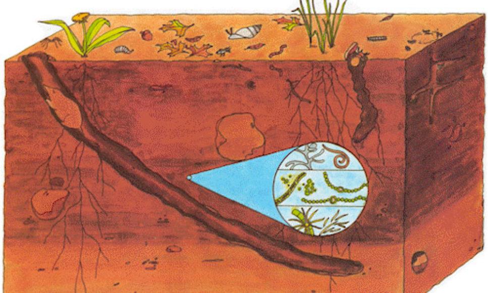 Soil Ecosystem