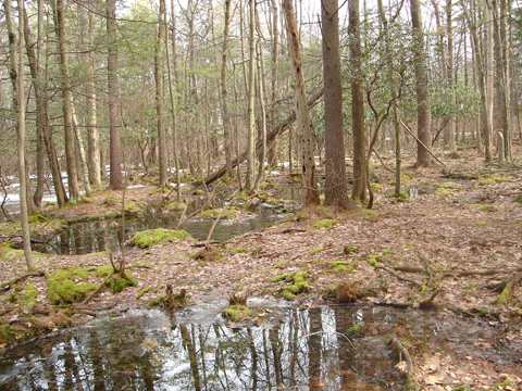 A photo of a wetland in PIke County, PA receiving runoff. Wetland conservation is important.