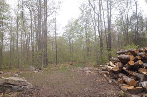 timber harvest 2016